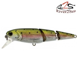 V Joint minnow River2Sea